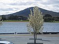 Trees in front of Hill at Commonwealth Place, Canberra (244971721).jpg