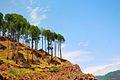 Trees on a cliff Murree.jpg