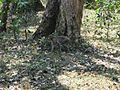 Trekking @ Wayanad wildlife Sanctuary - panoramio (5).jpg