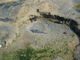 A leopard shark in a small, very shallow rock pool by the shore; a pair of sandals floating nearby show that the shark is quite small