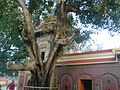 Trilokpur temple.jpg