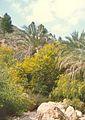 Tripoli - panoramio - sasikan (2).jpg