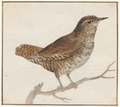 Troglodytes europaeus - 1753-1834 - Print - Iconographia Zoologica - Special Collections University of Amsterdam - UBA01 IZA1000228.tif
