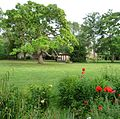 Trompetenbaum - panoramio.jpg