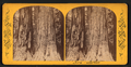 Two Sisters, from Robert N. Dennis collection of stereoscopic views.png