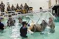 Underwater Egress Training Course - HELO Dunker 120515-M-SO289-009.jpg