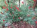 Unidentified Plants - പേരറിയുമോ - 2012-05-25 - 1.jpg
