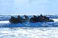 United States Navy SEALs 530.jpg