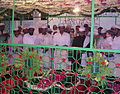 Urs hazrath machiliwale shah at kachiguda, hyderabad, india.jpg