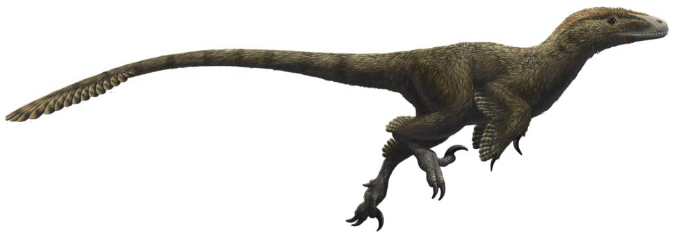 Utahraptor ostrommaysorum (flipped)