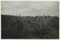 Utgrävningar i Teotihuacan (1932) - SMVK - 0307.k.0029.tif