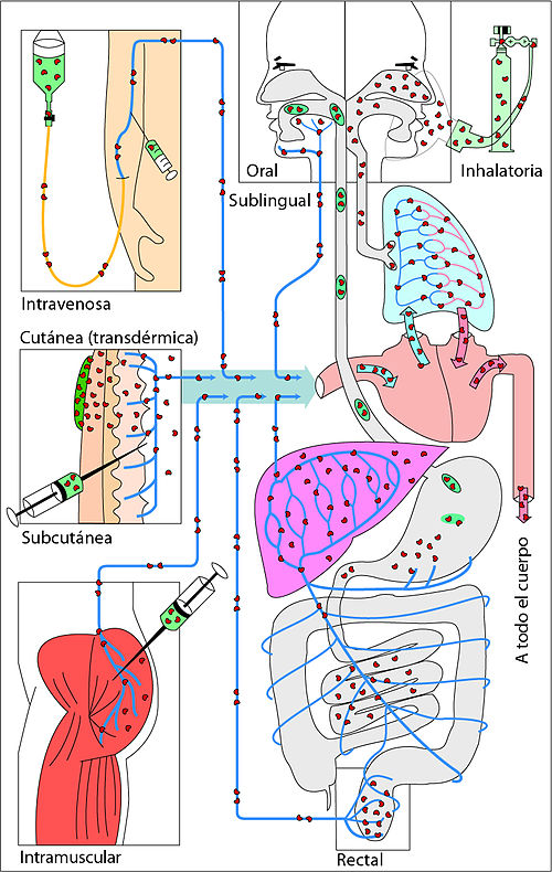 intranasal corticosteroids pregnancy