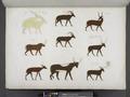 Varie specie di animali quadrupedi (NYPL b14291206-425573).tiff