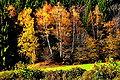 Velden Koestenberg Birkengruppe im herbstlichen Wald 02112008 55.jpg