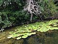 Veleka river flora.JPG