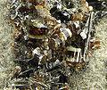 Vesuvianite-270335.jpg