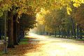 Viale Centrale, Parco Ducale - Parma.jpg