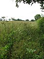 View east along a field boundary hedge - geograph.org.uk - 1384160.jpg