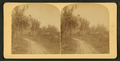 View of a forest trail, from Robert N. Dennis collection of stereoscopic views.png