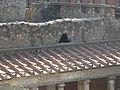 Villa Poppaea 2009 004 (RaBoe).jpg