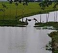 Village-Bhola-Barishal-Bangladesh.jpg