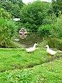 Village duck pond at Moddershall - geograph.org.uk - 199430.jpg