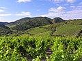Villeneuve-les-Corbières Vignoble en coteaux.jpg