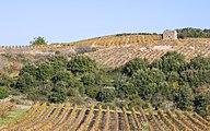Vineyards in Faugères 01.jpg
