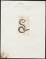 Vipera arietans - 1700-1880 - Print - Iconographia Zoologica - Special Collections University of Amsterdam - UBA01 IZ11700117.tif