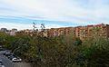 Vista dels arbres de l'avinguda de Blasco Ibáñez.JPG