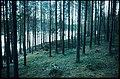 Vojmån - KMB - 16001000059546.jpg
