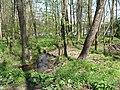 Vyžlovský rybník (037).jpg