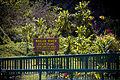 Wailua River State Park Fern Grotto.jpg