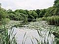 Wake Valley Pond - geograph.org.uk - 2500938.jpg