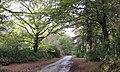 Wareham - Carey area - geograph.org.uk - 1577543.jpg