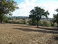 Warwickshire fields - geograph.org.uk - 1540790.jpg