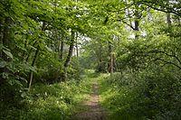 West Wood 1.jpg