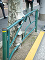 White tree with Guardrail in Japan 2012.jpg