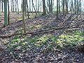 Wielkopolski Park Narodowy wiosną 1.jpg