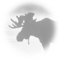 Wmca banner moose.png