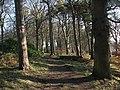Wood, Galachlaw - geograph.org.uk - 699372.jpg