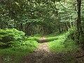 Woodland track - geograph.org.uk - 480696.jpg