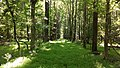Woods at Widewater State Park.jpg
