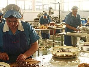 Español: Trabajadoras manipulando anchoas en u...