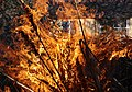 Wraxall 2013 MMB 90 Bonfire.jpg