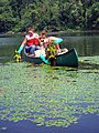 YCC crew removing water chestnut (4791162608).jpg