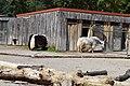 Yaks - Zoopark Erfurt.jpg
