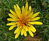 Yellow flower with critters.jpg