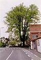Zottegem Leeuwergem Gentse Steenweg Zevensacramentenboom (1) - 188595 - onroerenderfgoed.jpg