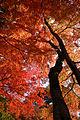 Zuihoji park03s3872.jpg